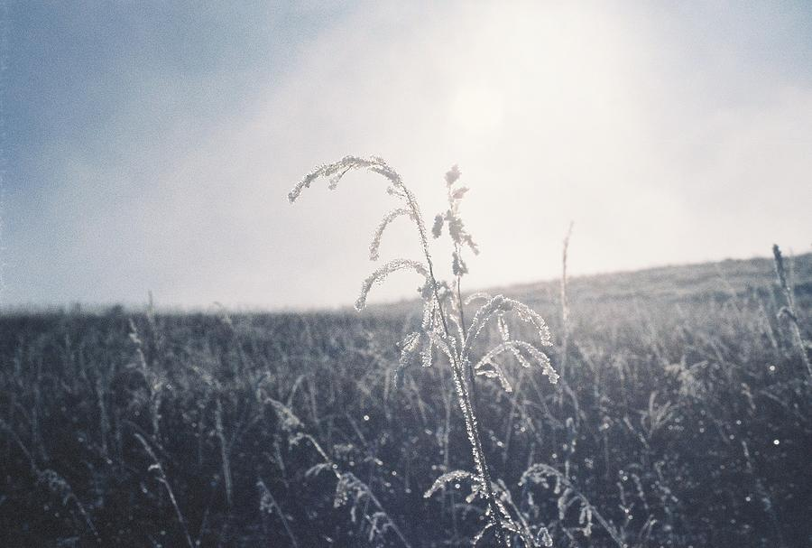 Frost Photograph - Frozen In Time by Trent Mallett