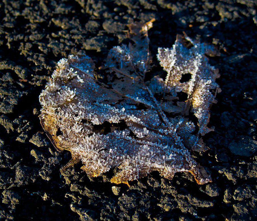 Ireland Photograph - Frozen Ireland by Black Sun Forge