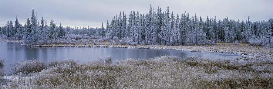 Bog Photograph - Frozen Swampland, Near 100 Mile House by David Nunuk