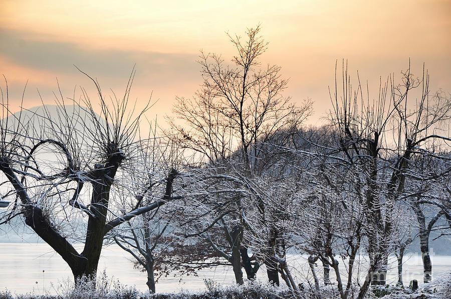 Frozen Photograph - Frozen Trees by Mats Silvan