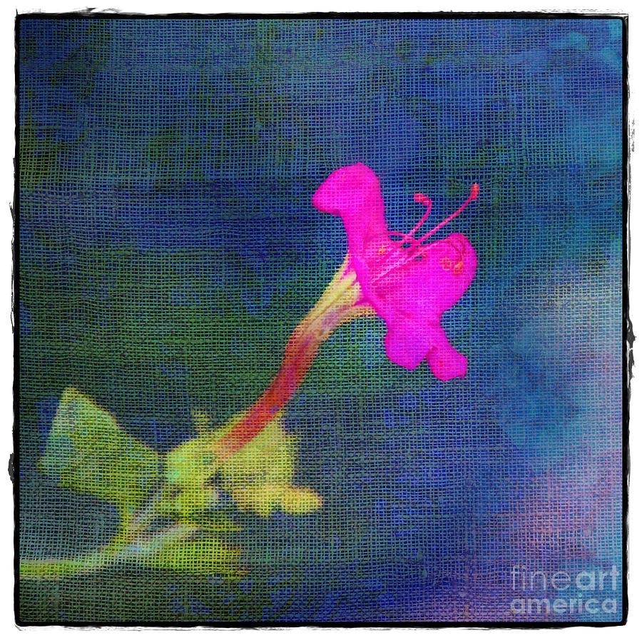 Pink Photograph - Fuchsia Flower by Judi Bagwell