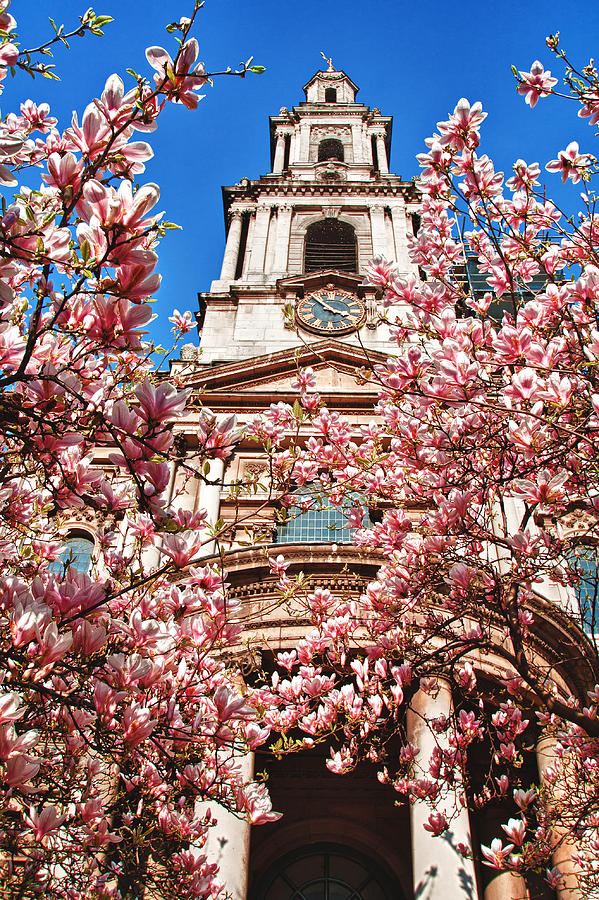 Church Photograph - Full Bloom by Shirley Mitchell