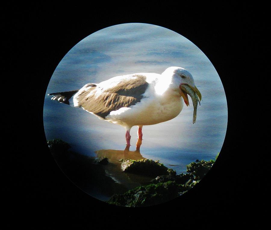 Bird Gullet