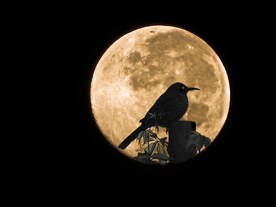 It is an image of Canny Birds In The Moon Drawing