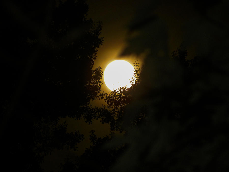 Background Photograph - Full Moon by Ester  Rogers