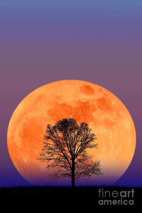 Astronomy Photograph - Full Moon by Larry Landolfi and Photo Researchers
