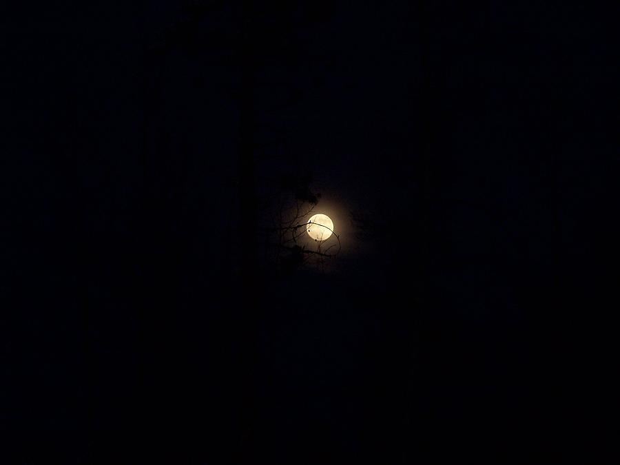 Full Moon Photograph - Full Moon by Susan Saver