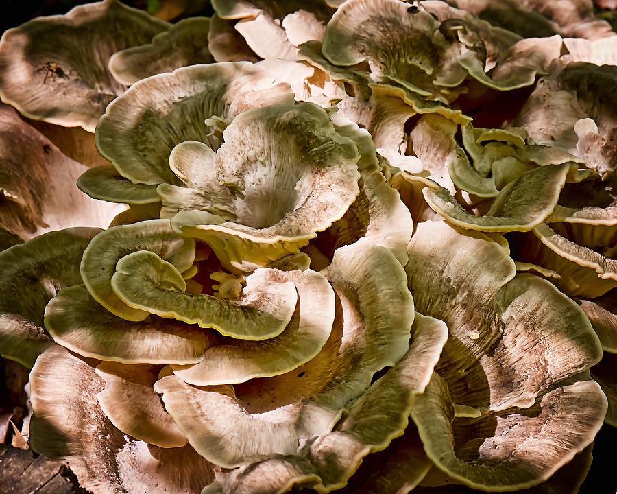 2011 Photograph - Fungus Swirl by Michael Putnam