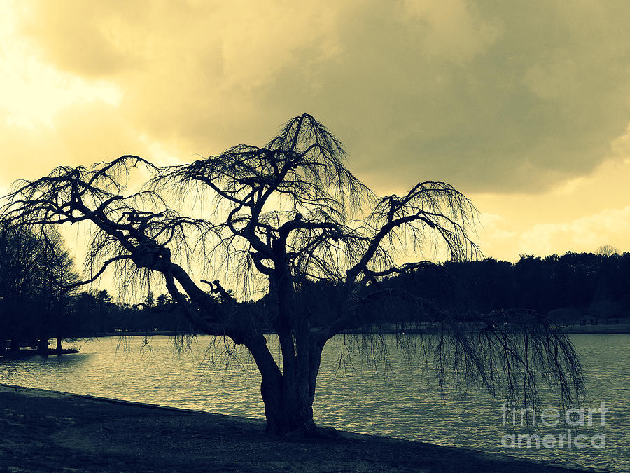 Scenic Photograph - Furman Lake Tree by Crystal Joy Photography