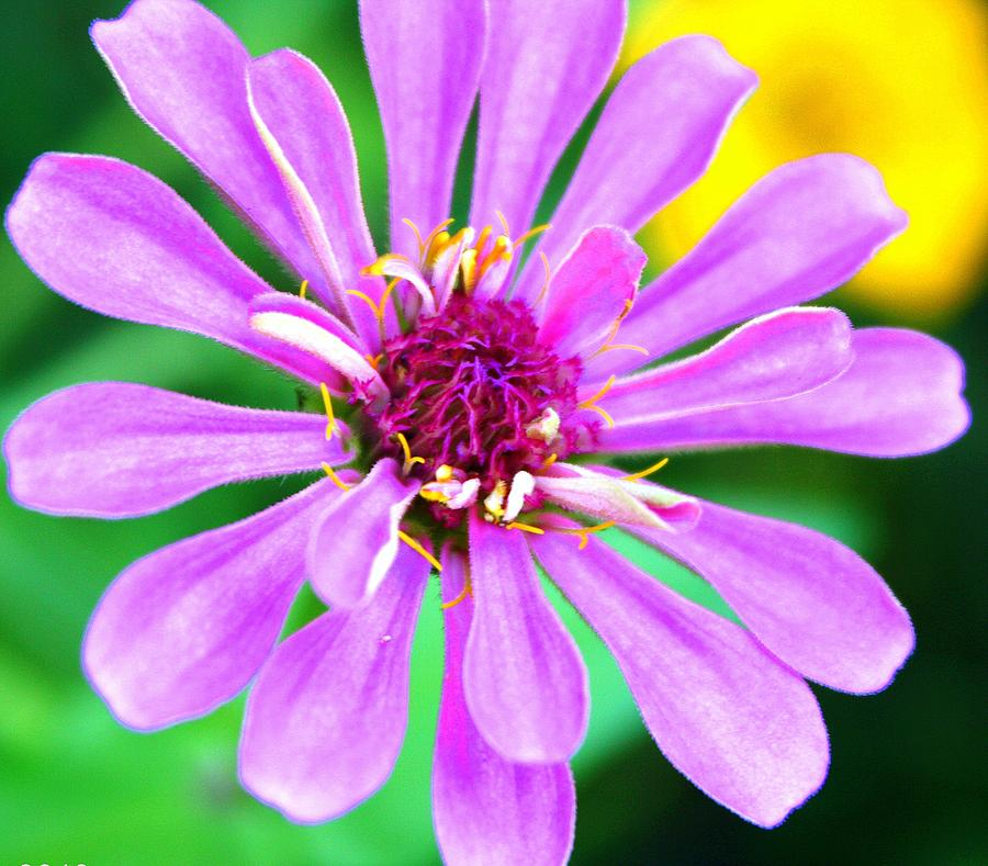 Flowers Photograph - Fushia Fantasy by LC  Linda Scott
