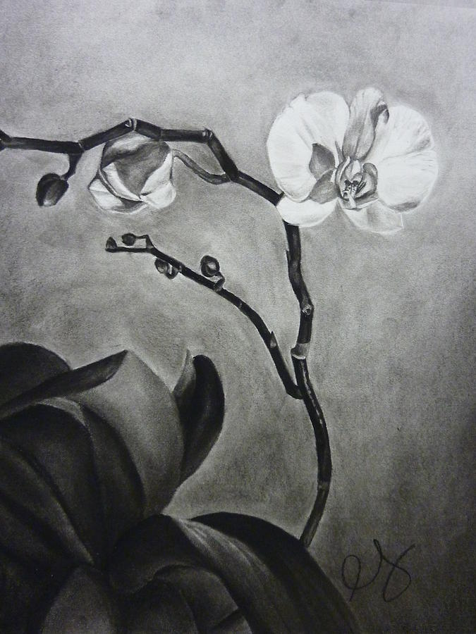 Orchid Drawing - Galens Orchid by Estephy Sabin Figueroa
