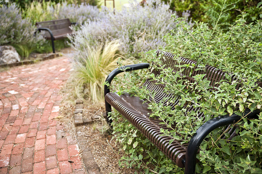 Bench Photograph - Garden Bench by Melany Sarafis
