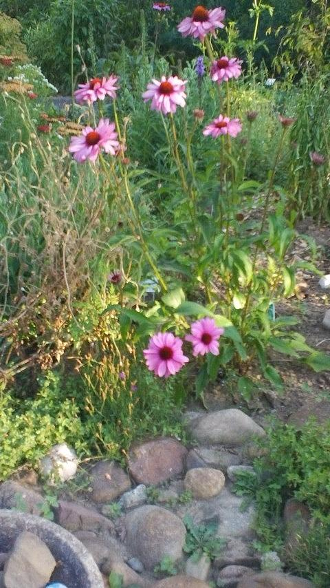 Garden Flowers And Rocks Photograph - Garden Flowers And Rocks by Thelma Harcum