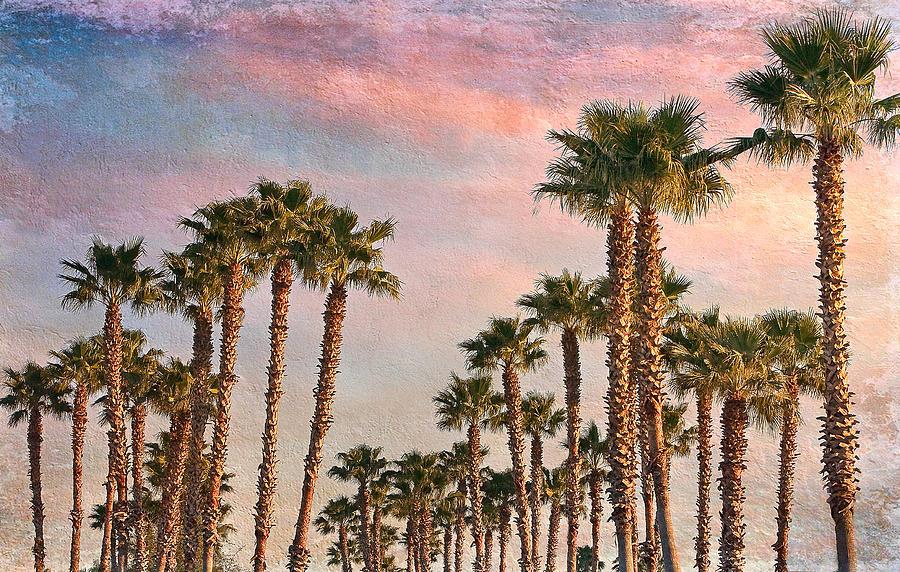 Palms Photograph - Garden Of Palms by Stephen Warren