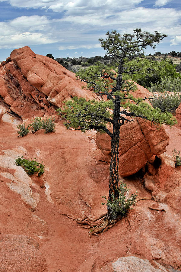 Natural Photograph - Garden Of The Gods  - The Name Says It All by Christine Till