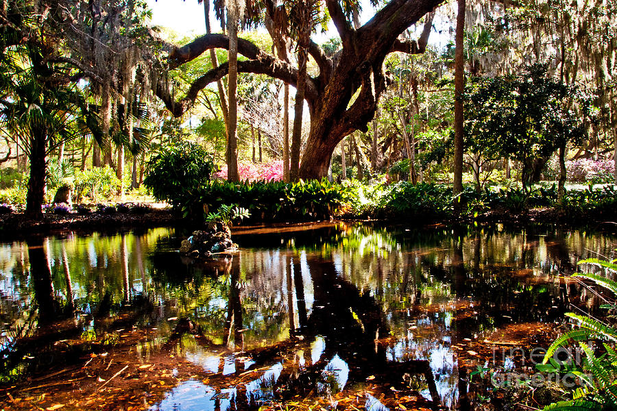 Garden Photograph - Garden Reflections by Bob and Nancy Kendrick