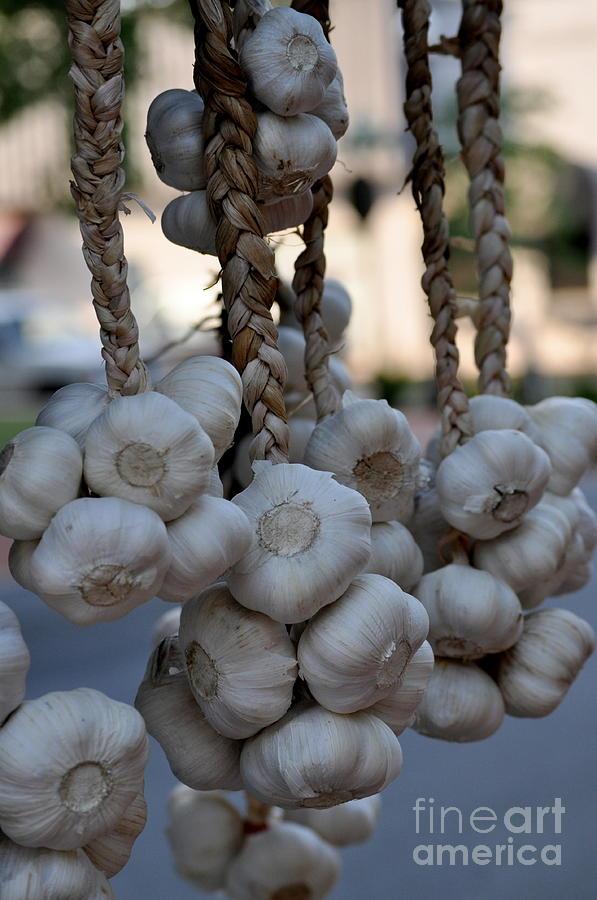 Garlic Photograph - Garlic by Nicky Dou