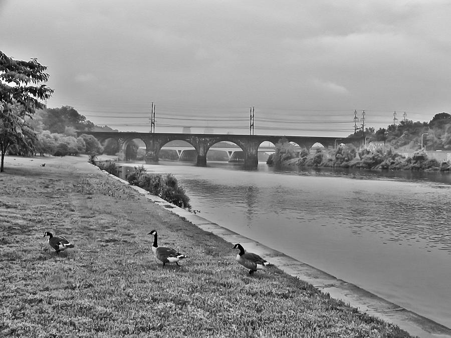 Geese Along The Schuylkill River Photograph - Geese Along The Schuylkill River by Bill Cannon