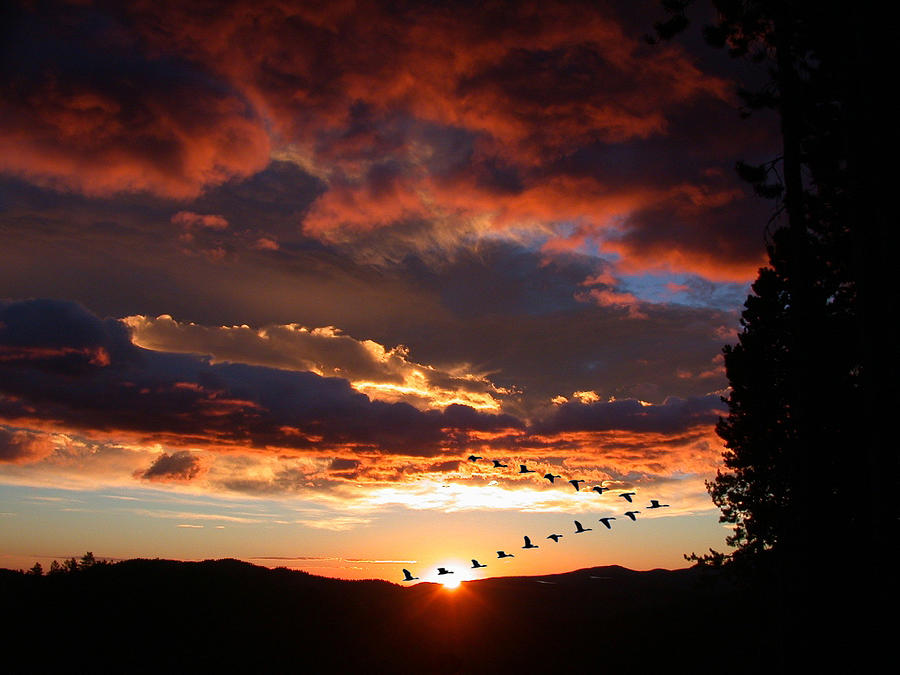 Geese Flying At Sunset Photograph by Shane Bechler