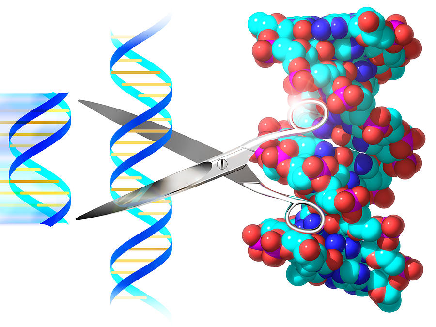 an analysis of the effects of genetic engineering in the biochemistry Category: exploratory essays research papers title: research in genetic engineering should be halted.