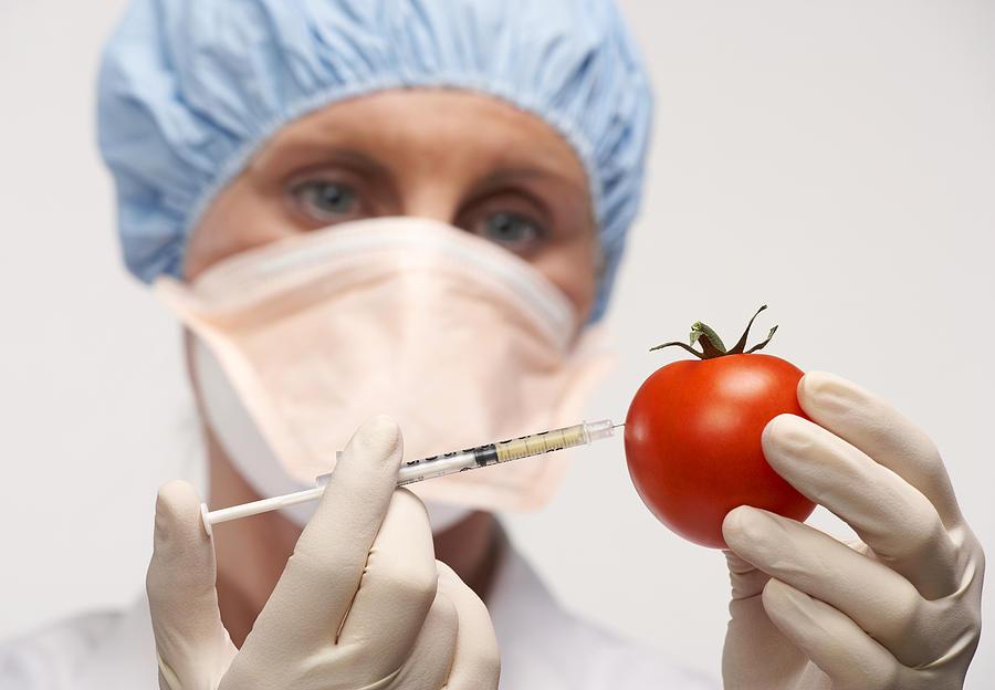 Solanum Lycopersicum Photograph - Genetically Engineered Tomato by Mark Sykes