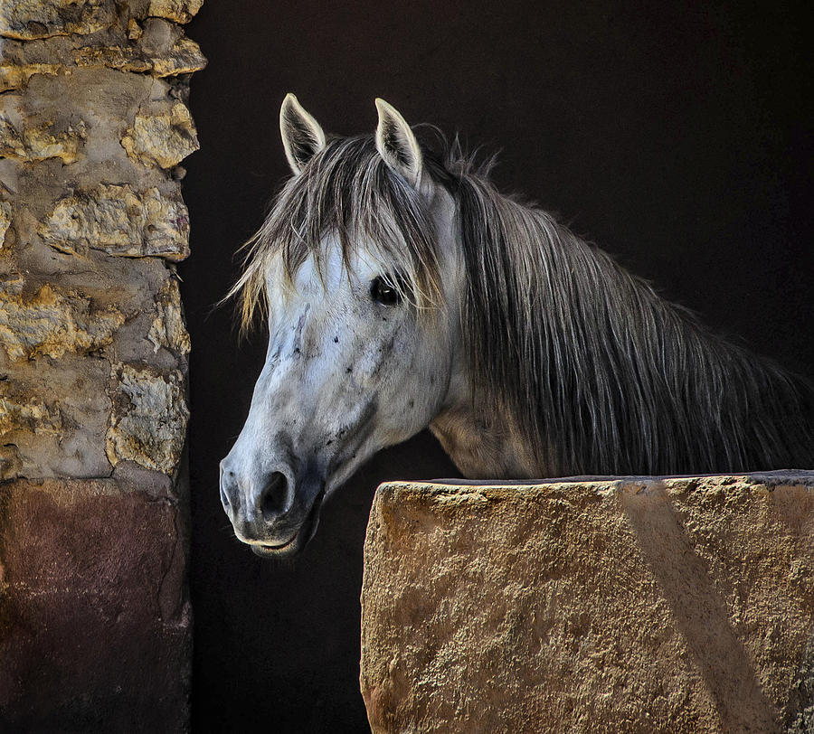 Horse Photograph - Gentle Beauty In Morocco by Marion McCristall