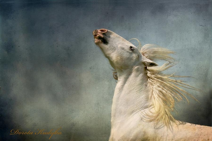 E Photograph - Georgiano Cavalli by Dorota Kudyba