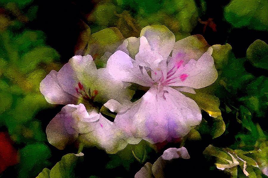 Floral Photograph - Geranium 8 by Pamela Cooper