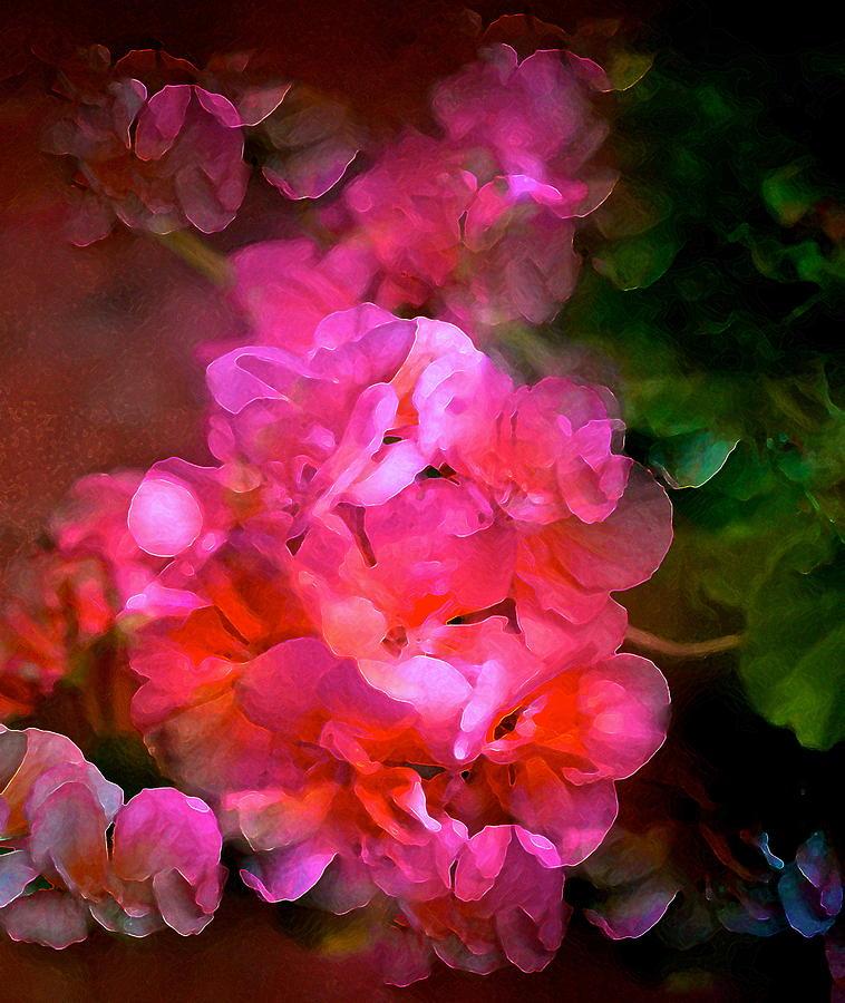 Floral Photograph - Geranium 9 by Pamela Cooper