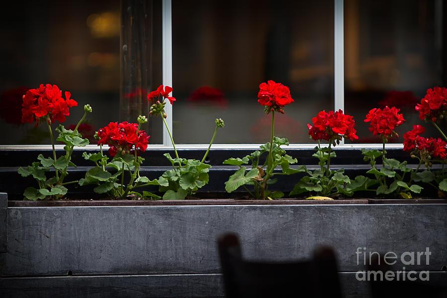 Antwerpen Photograph - Geranium Flower Box by Doug Sturgess