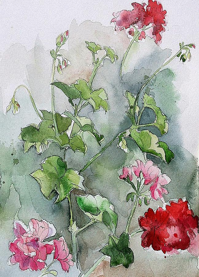 Watercolour Painting - Geraniums by Stephanie Aarons