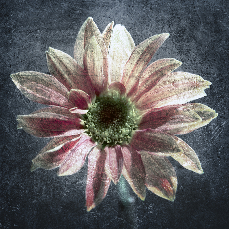 Abstract Photograph - Gerbera by Stelios Kleanthous
