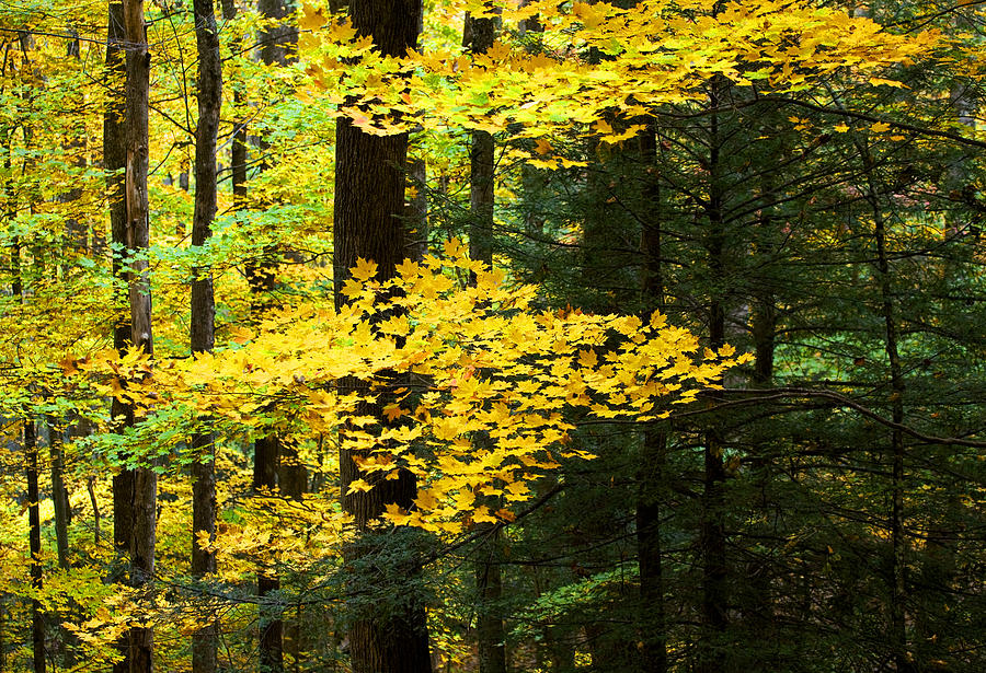 Fall Color Photograph - Getting Ready by Rich Franco
