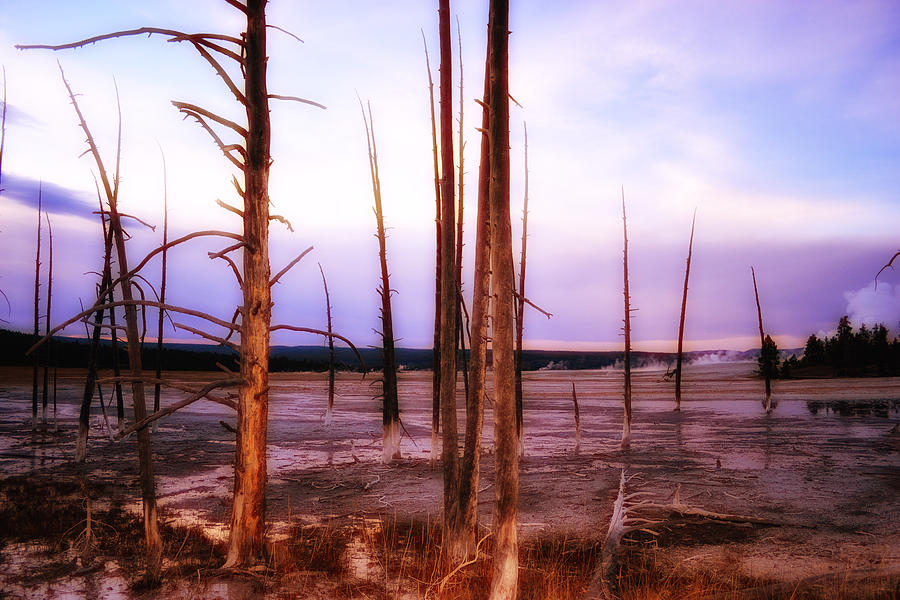 Tree Photograph - Geyser Basin Trees by Kelly Reber