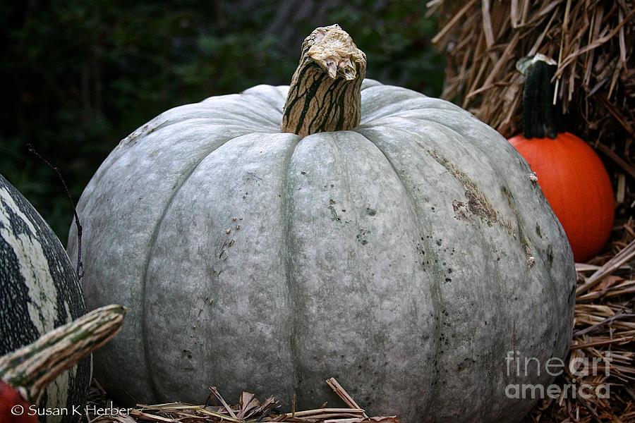 Outdoors Photograph - Ghost Pumpkin by Susan Herber