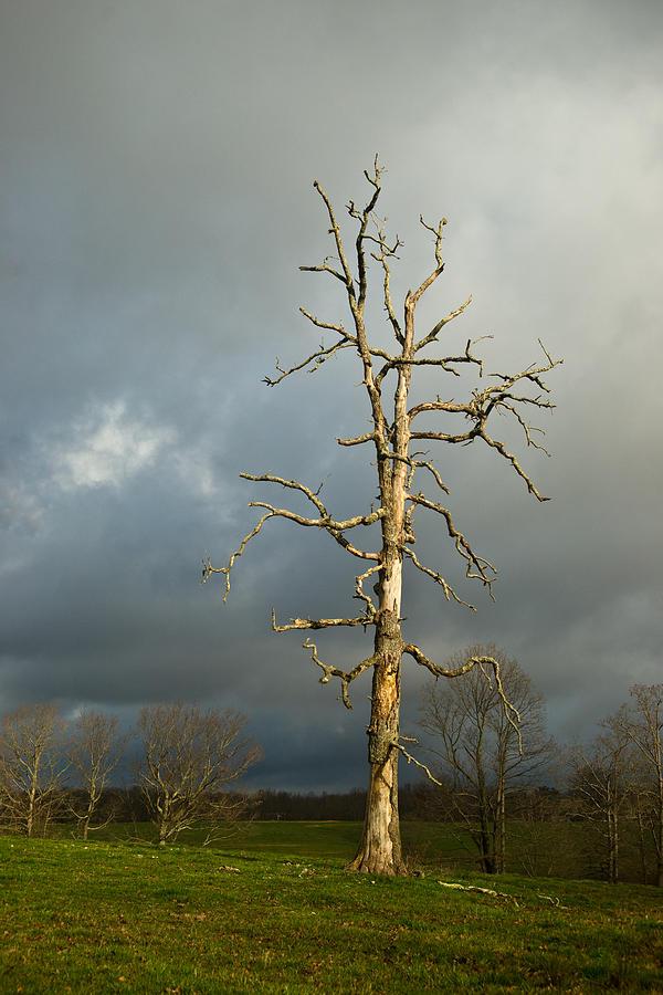 Ghostly Photograph - Ghost Tree by Douglas Barnett