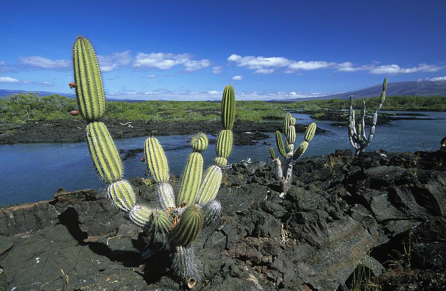 Fn Photograph - Giant Candelabra Cactus Jasminocereus by Winfried Wisniewski