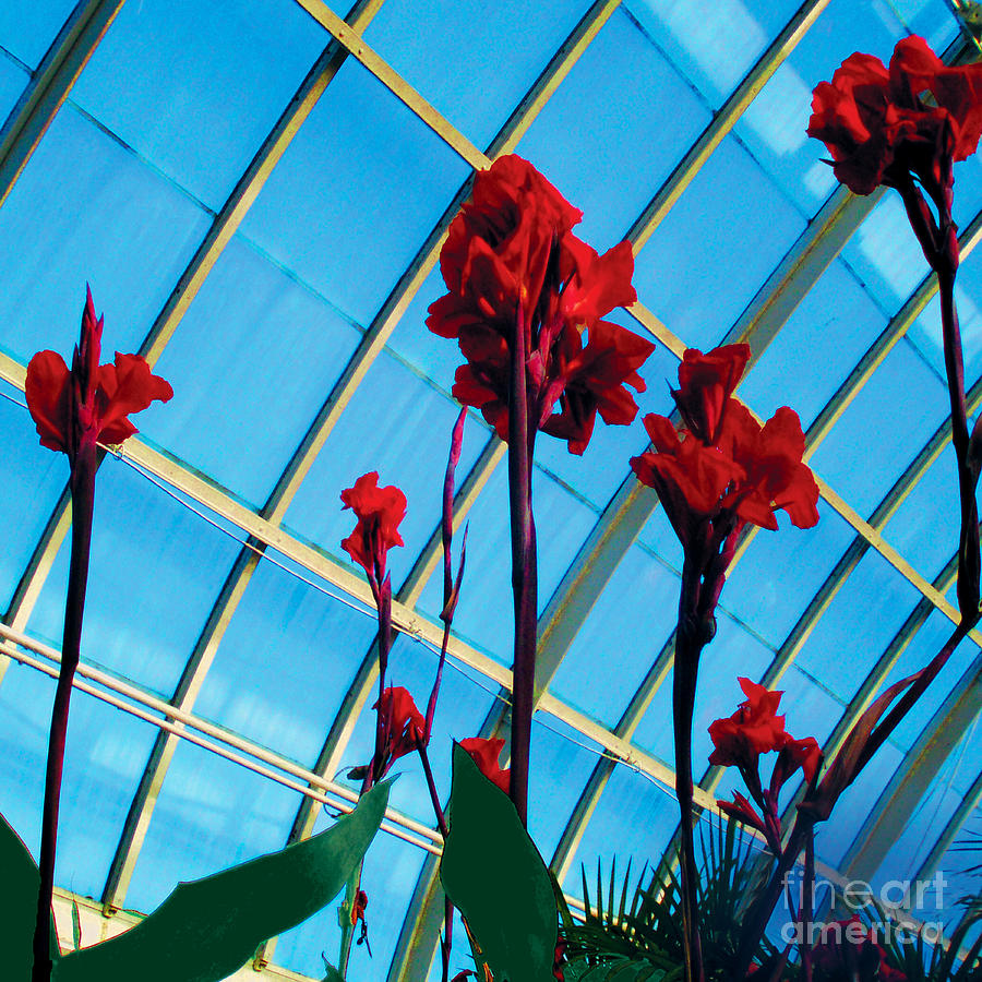 Giant Canna Photograph - Giant Canna Lilly by David Klaboe