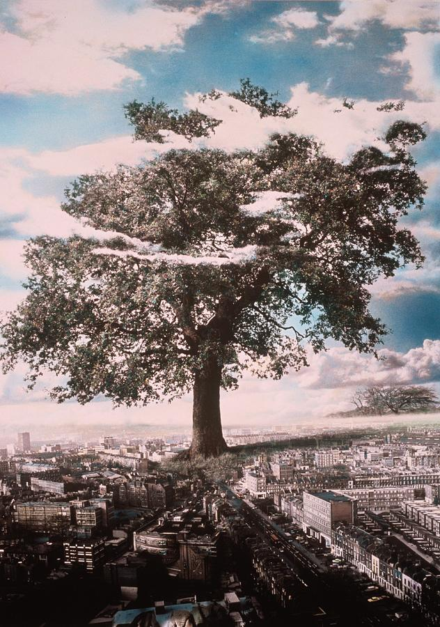 Soaring Photograph - Giant Tree In City by Hag