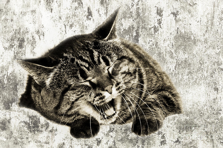 Cat Photograph - Giggle Kitty  by Andee Design