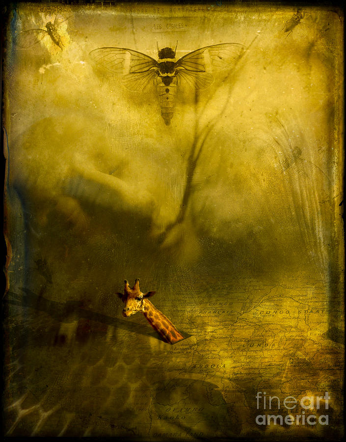 Giraffe Photograph - Giraffe And The Heart Of Darkness by Paul Grand