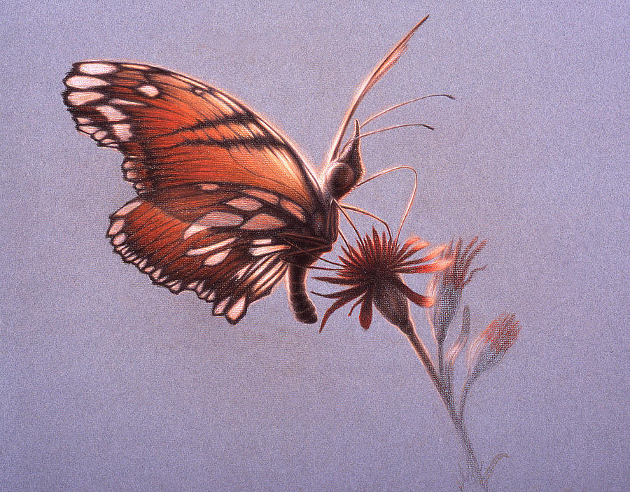Butterfly Painting - Girawheen Place Of Flowers  by Shawn Kawa