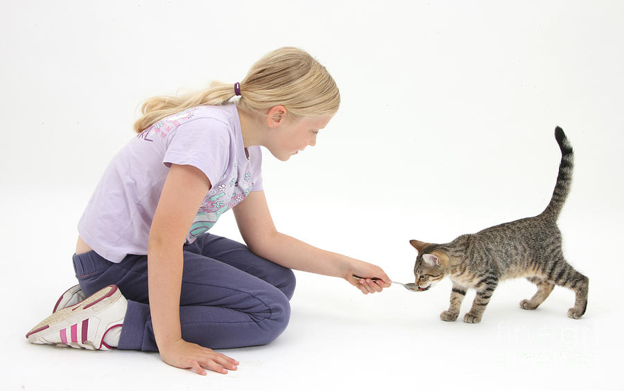 Nature Photograph - Girl Feeding Kitten From A Spoon by Mark Taylor