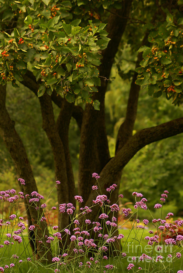 Tree Photograph - Give Life A Chance - V02 by Aimelle