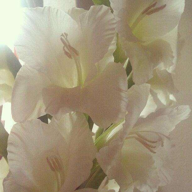 Summer Photograph - Gladioli by Kimberley Dennison