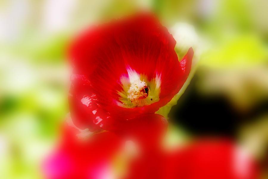 Gladiolus Flower Photograph - Gladiolus by Toni Hopper