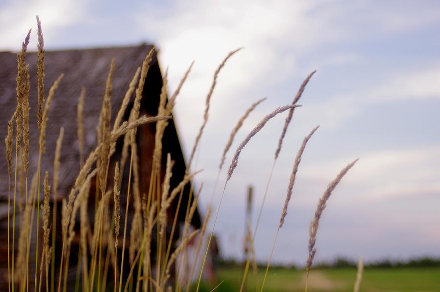 Farm Photograph - Glancing Back At A Memory by Kelly Reich