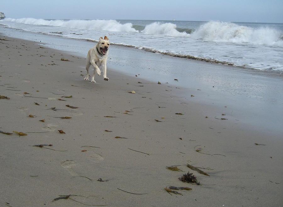Dog Photograph - Glee by Kim Aberle