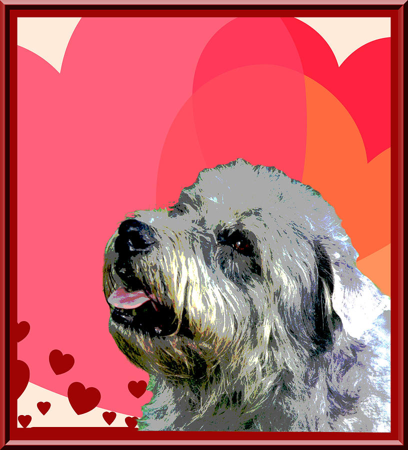 Glen Of Imaal Terrier Photograph - Glen Of Imaal Terrier by One Rude Dawg Orcutt