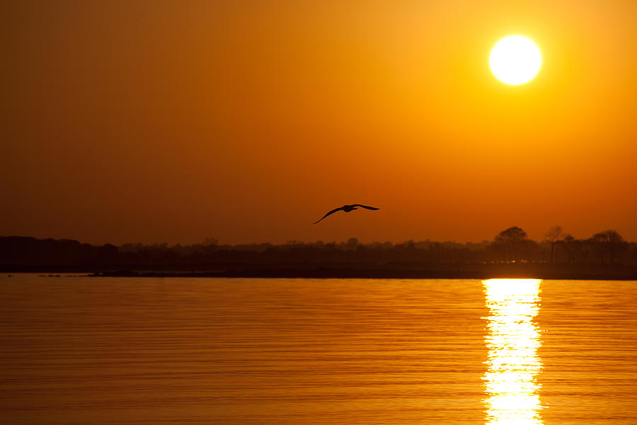 Sunset Photograph - Glides Into Evening by Karol Livote
